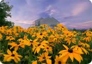 密苏里州大急流的春花盛开