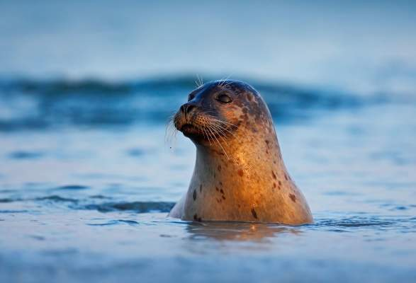 Seal And Seabird Safari Nature