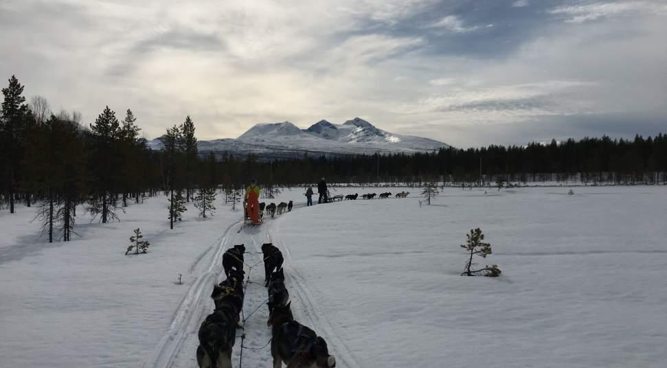 Jabsco Toilet Aanbieding : Snowman dogsledding destination snowman