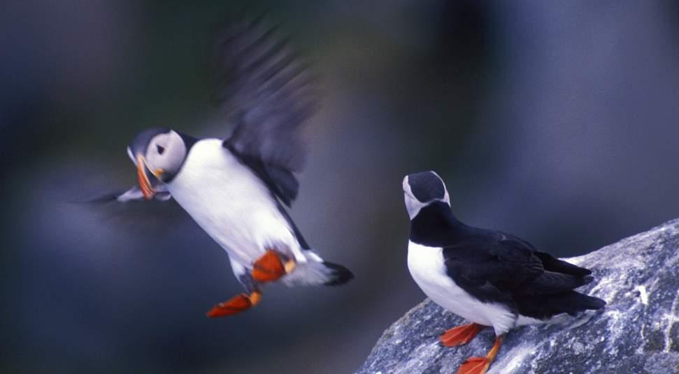 Runde Bird Island