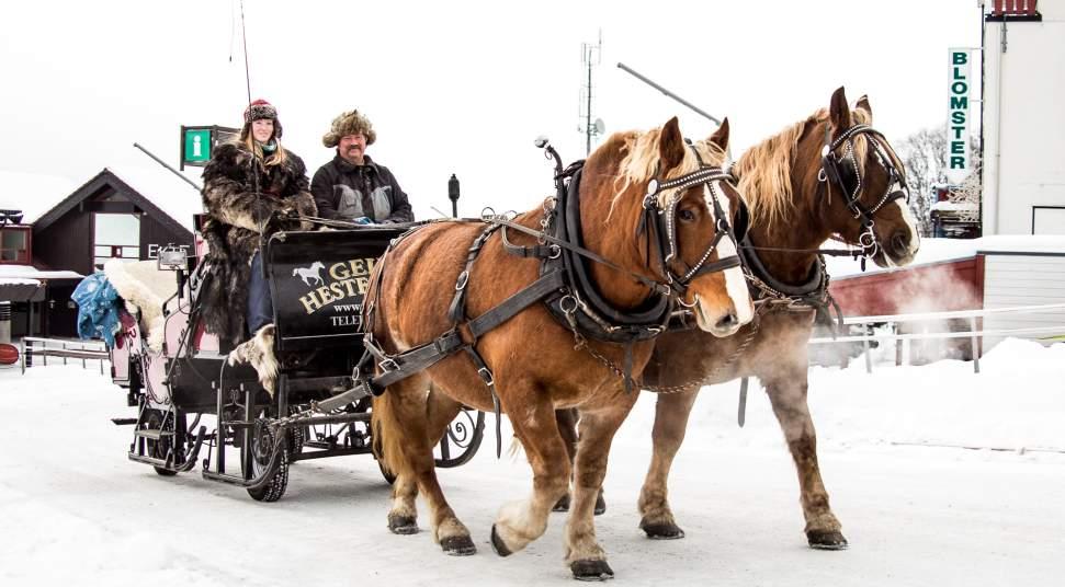 horse drawn sleigh ride geilo hestesenter