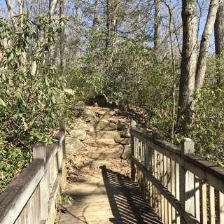 Naturalist Niche: Big Tree Walk
