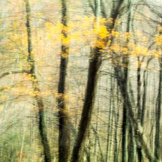 Autumn in Abstract Photography Workshop