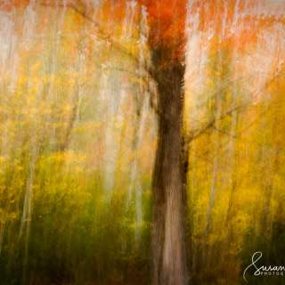 Autumn in Abstract: Photographing Vivid Colors & Light in the Landscape