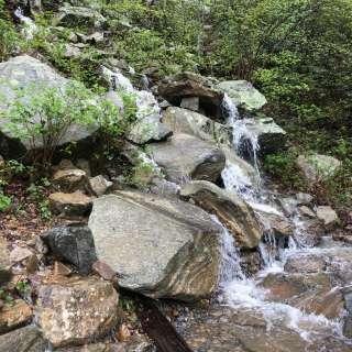 Naturalist Niche: Watershed Hike