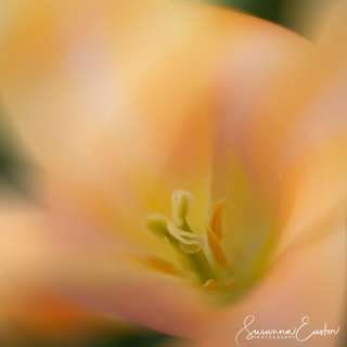 Spring in Abstract: Translating the Soft Colors of Flowering Landscapes with ICM