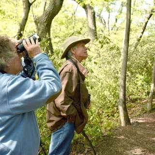 Naturalist Niche: Spring Migration Hike