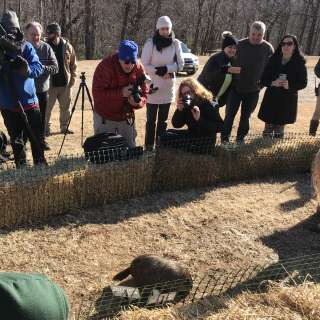 14th Annual Groundhog Day Celebration