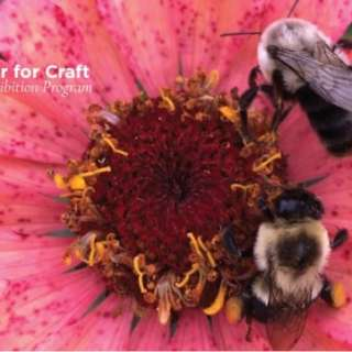 Supporting Native Bees Workshop with Spriggly's Beescaping