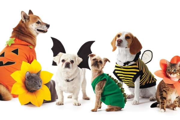 Pet Parade & Costume Contest