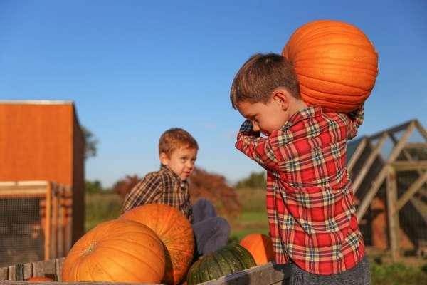 Pumpkin Plummet