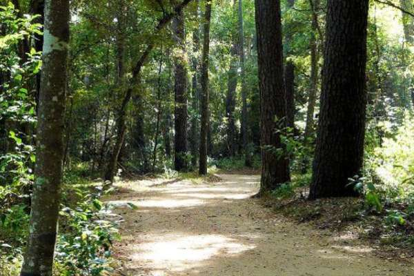 Mercer Arboretum and Botanical Gardens | Things To Do in Humble, TX ...