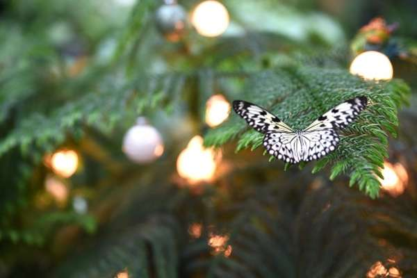 25% off White Christmas event at the Cockrell Butterfly Center