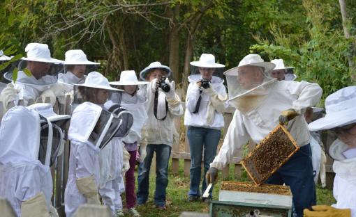 hillside apiaries coupon