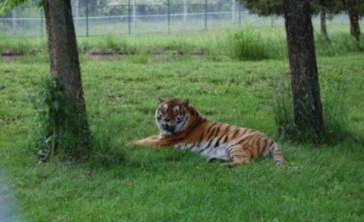 Cedar Cove Feline Sanctuary & Education Center   Louisburg