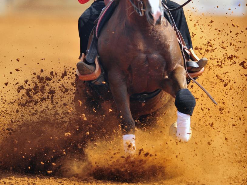 76th Annual California Saddle Horse Futurity