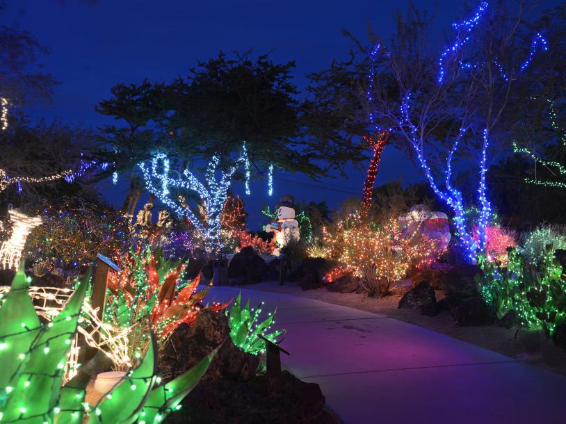 Holiday Cactus Garden