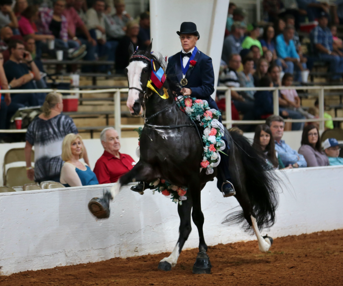 racking horse pic