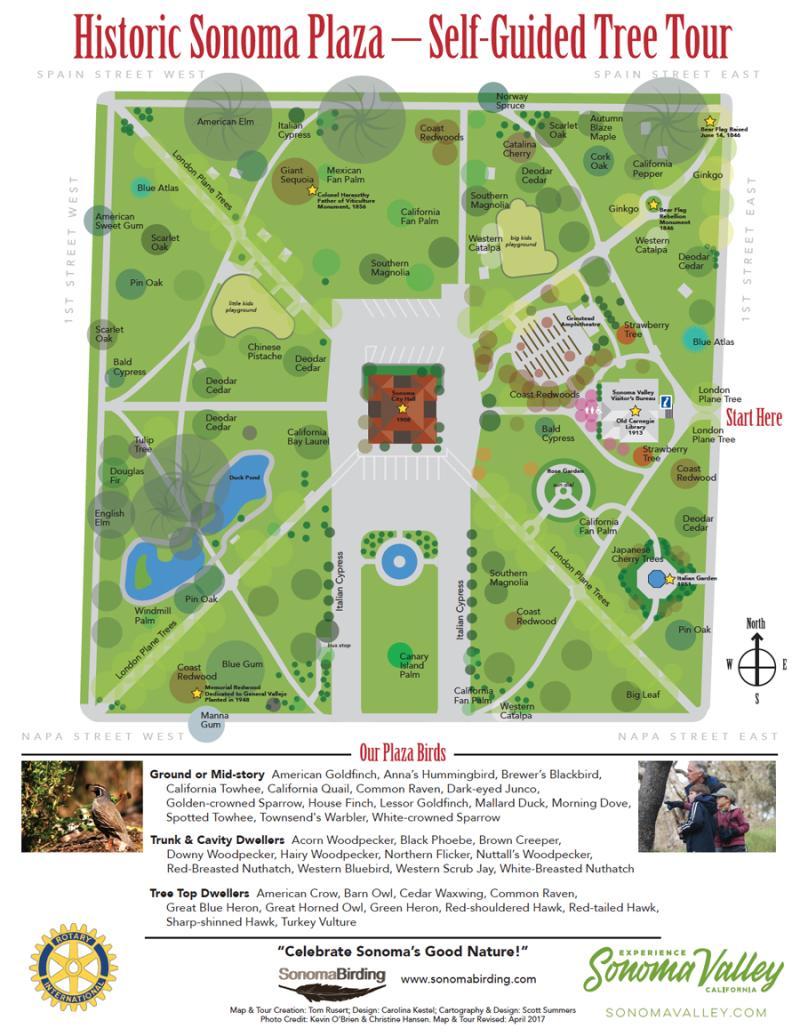 Sonoma Plaza Tree Map
