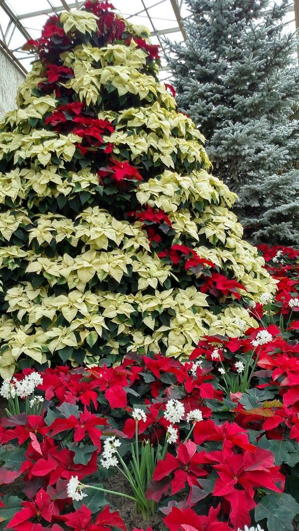 Conservatory Christmas 2