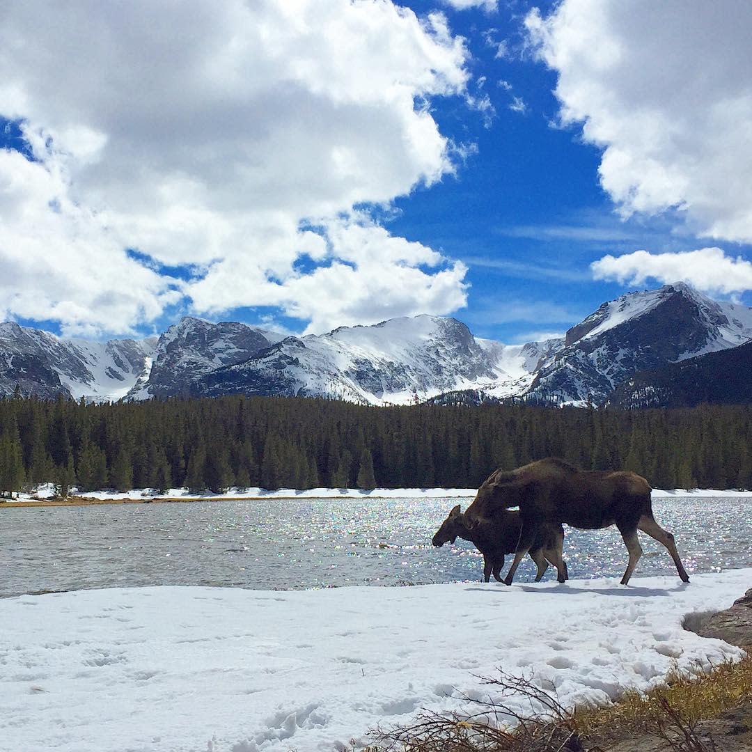 Moose Lake Snow Spring