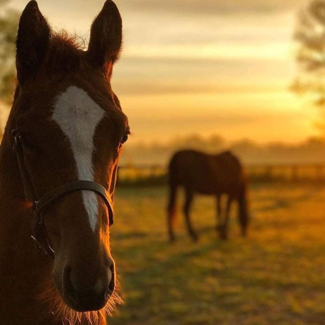 kentucky horse farm georgetown