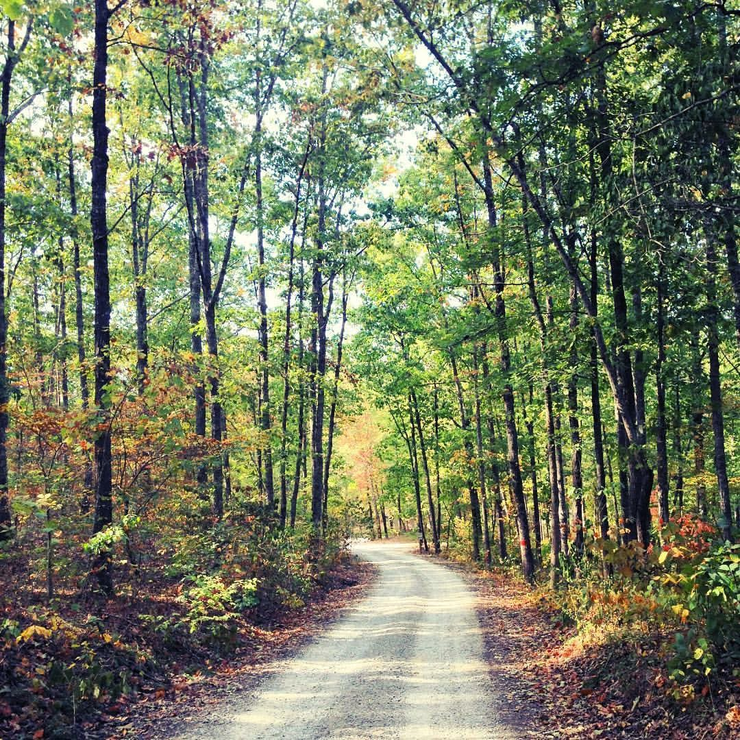 Bankhead Forest