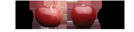 Cortland & Red Delicious Apples