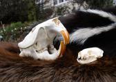 Skull and Pelt