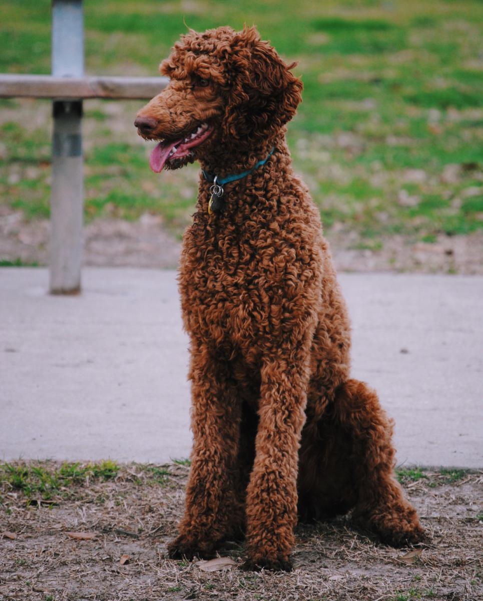 Dog Park Pet Friendly