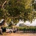 Vineyard Excursion