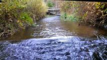Trails Blog Des Moines Creek