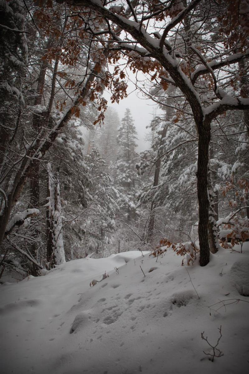 Untouched Snowfall