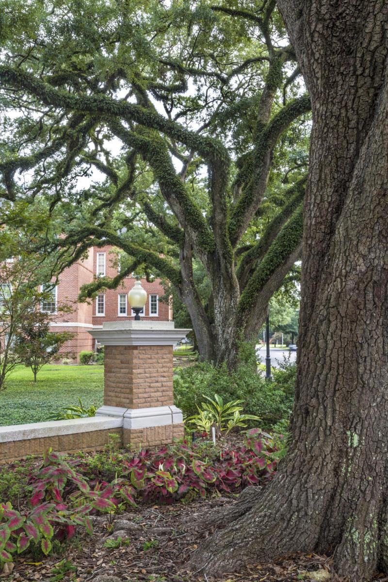 20th Century Oaks