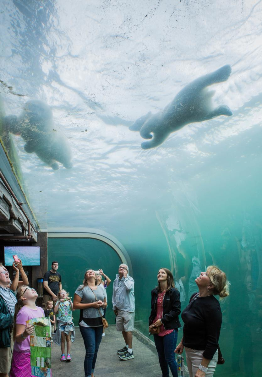 Columbus Zoo Polar Bears