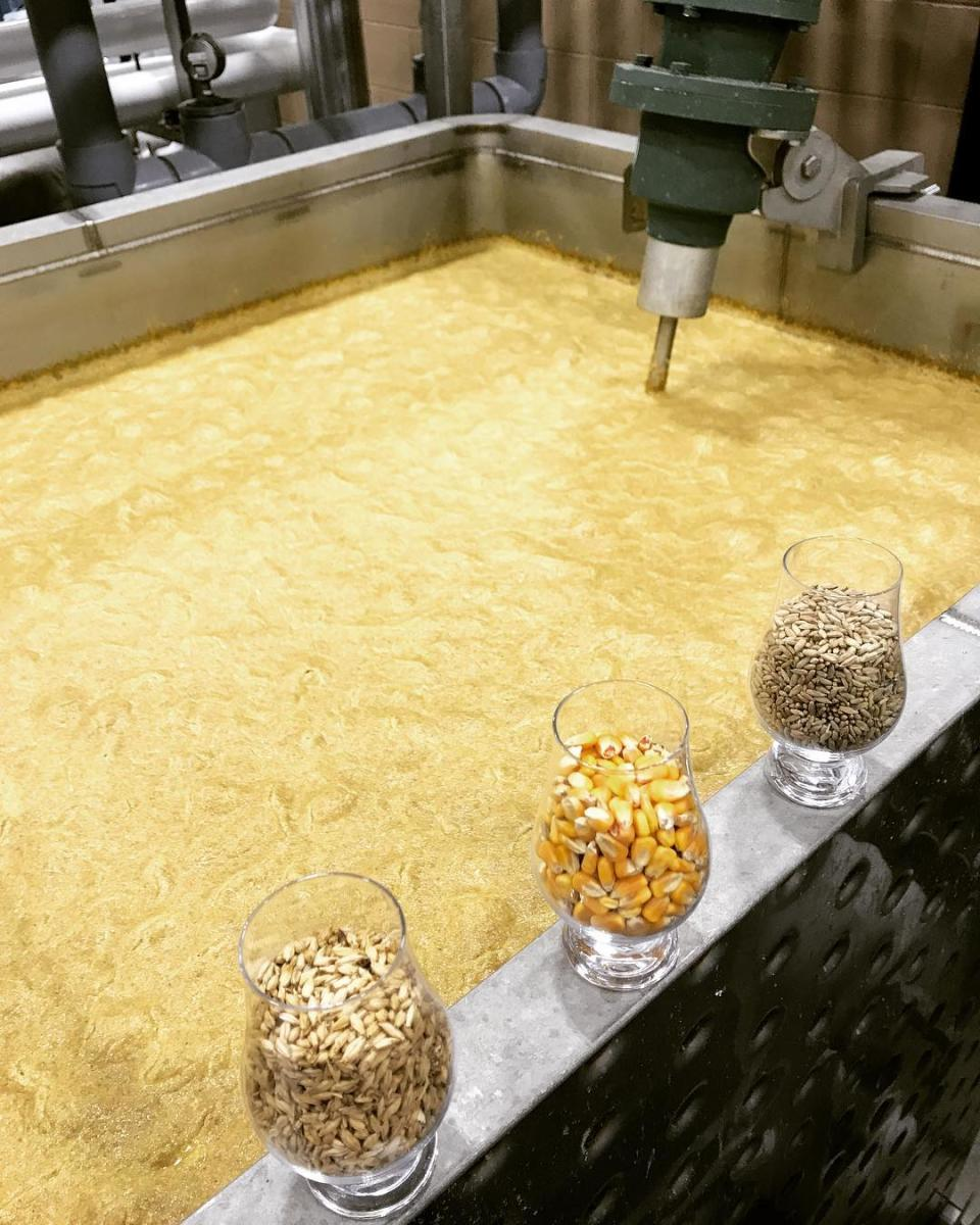 golden mash in a fermenter at boone county distilling co. with three glasses full of corn and other grains on the side