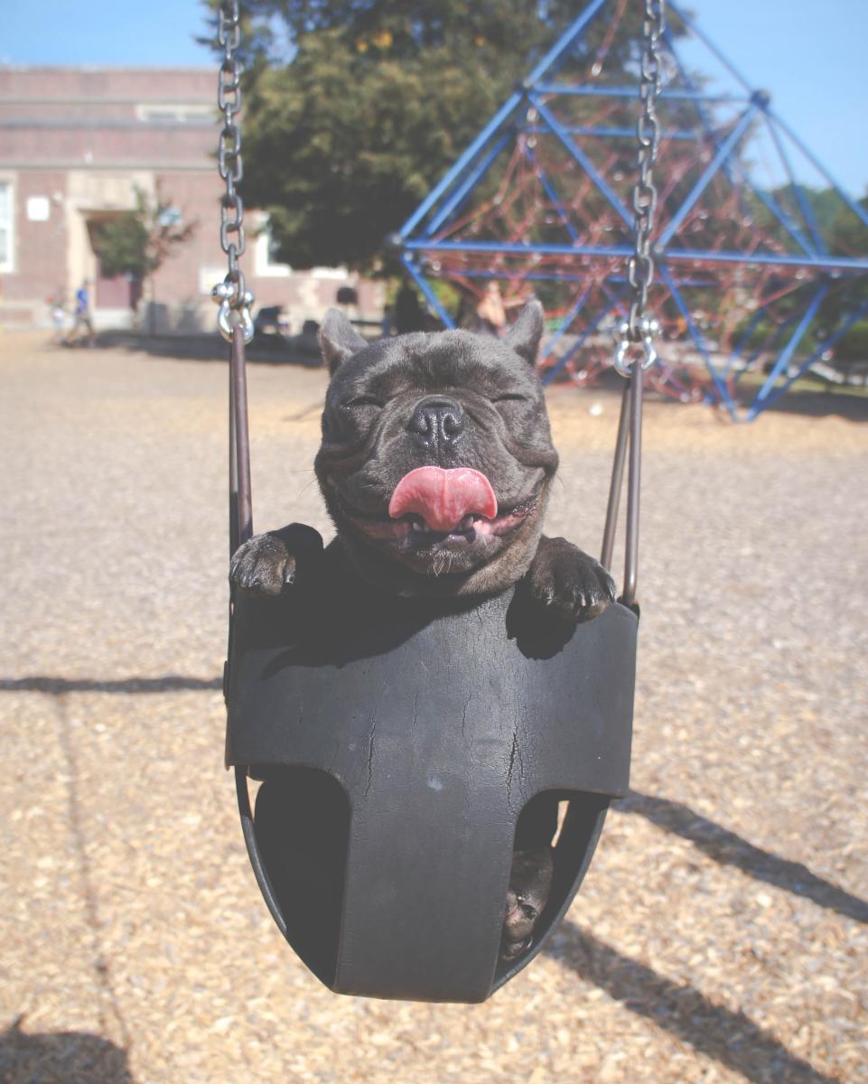 Happy Puppy Sitting in a Swing