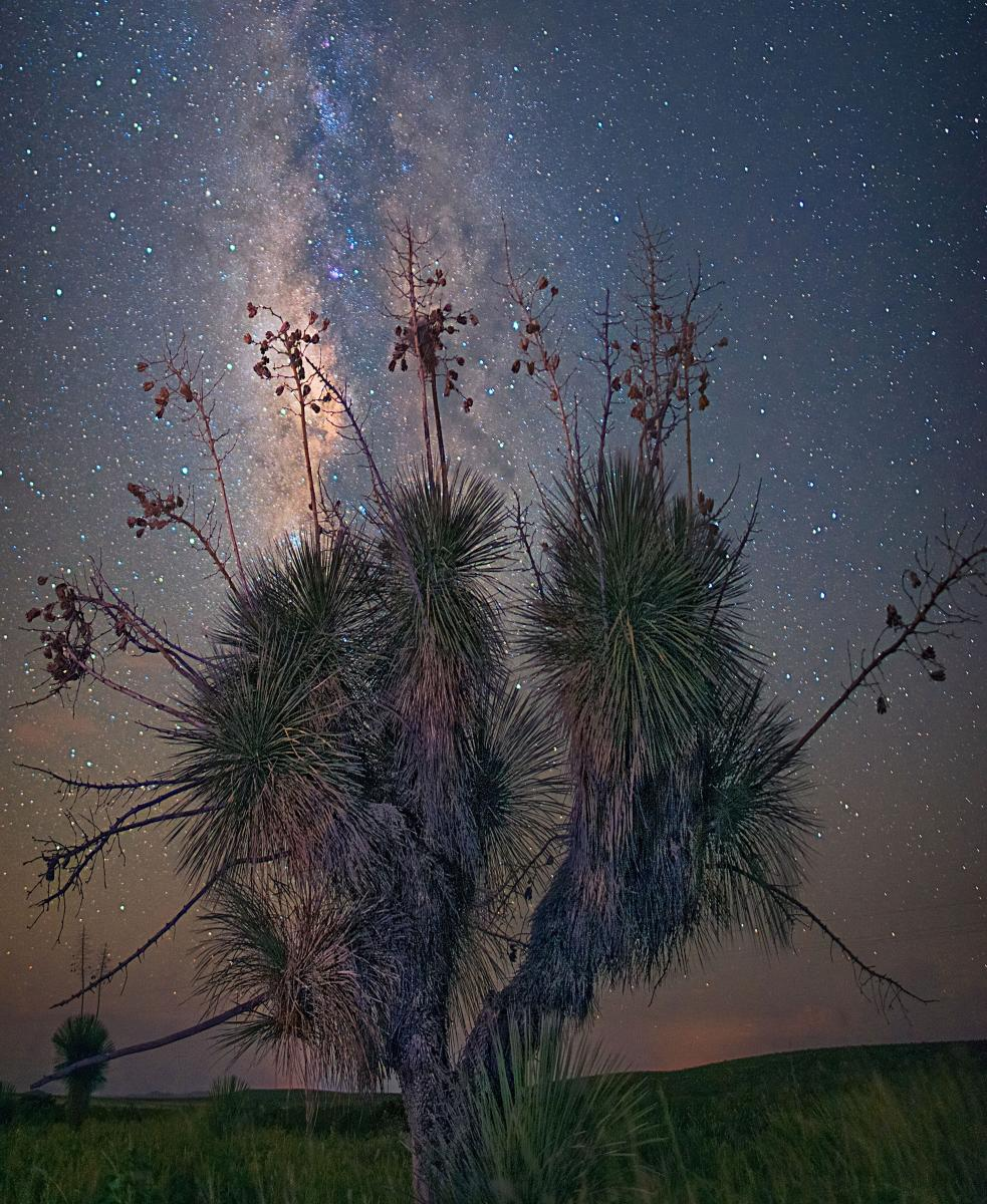 Yucca Under the Milky Way