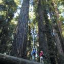 Sequoia Park Hikers