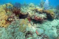 Makay s Reef 1 web