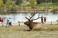 Elk Fest