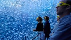 Long Island Rail Road Getaway-National Geographic Encounter: Ocean Odyssey