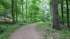 Trees of Rockefeller Preserve: Tree ID Walk with John McShane