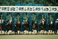 Vinton Horse Racing
