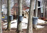 Maple Hollow Farms, 1309 county Route 85, Hannibal, will offer guided tours with samples of fresh maple syrup and three flavors of maple cream.