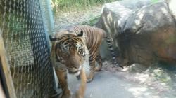 Point Defiance Zoo and Aquarium in Tacoma Washington - Tiger