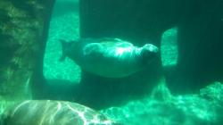 Point Defiance Zoo and Aquarium in Tacoma Washington