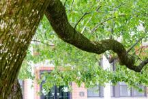 Vitamin O tree from Shetley story