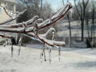 Photo: Ice Crystals. Photo by Judy Onufer.