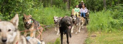 Iditarod Experiences